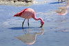 The flamingo's mirror by Toka83