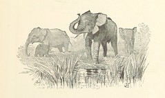 "British Library digitised image from page 11 of ""Travels in Africa during the years 1875-1878 (1879-1883-1882-1886) ... Translated from the German by A. H. Keane ... Illustrated"""