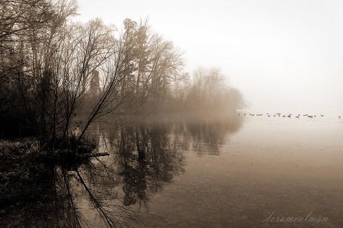 blackandwhite bw mist beautiful landscape nc northcarolina gastonia robinwoodlake dorameulman mistytrio