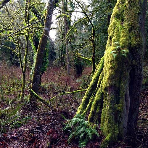 winter forest washington unitedstates pacificnorthwest northamerica washingtonstate iphone tolmiestatepark iphoneography