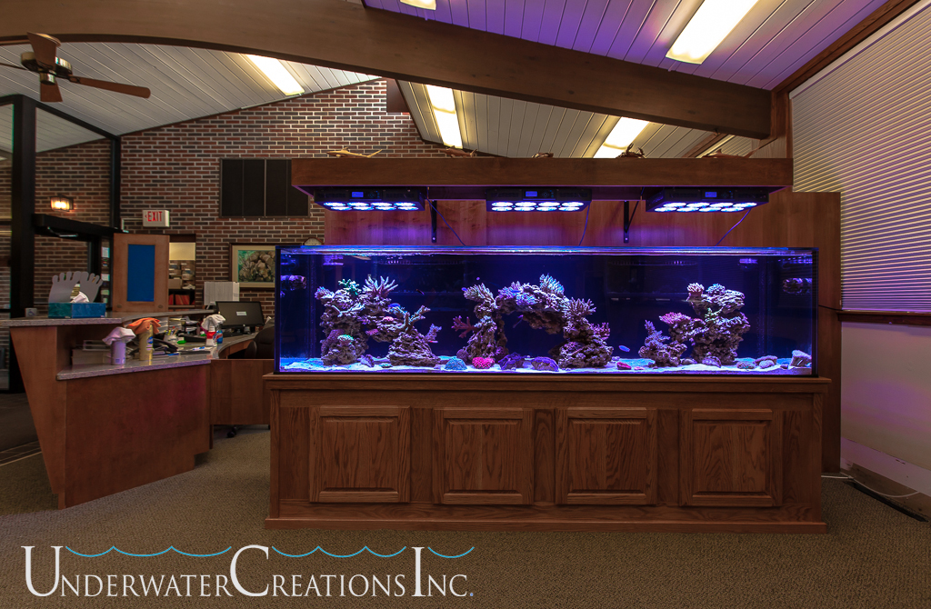 10 000 Gallon Saltwater Fish Tank 20 000 Gal Tank