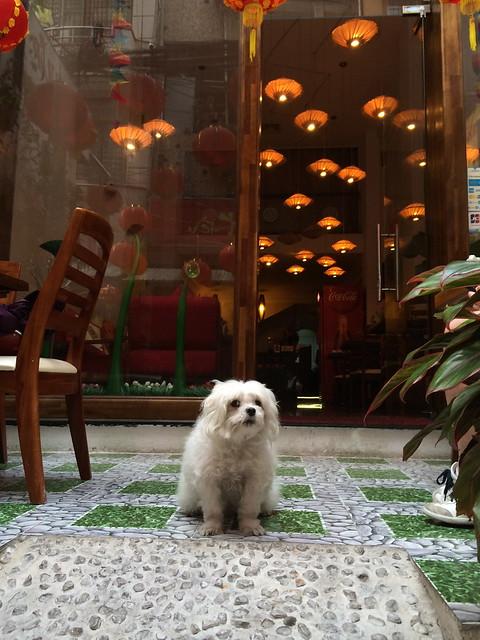 Pink Tulip Hotel guard dog