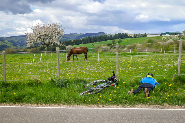 Spying the horse?