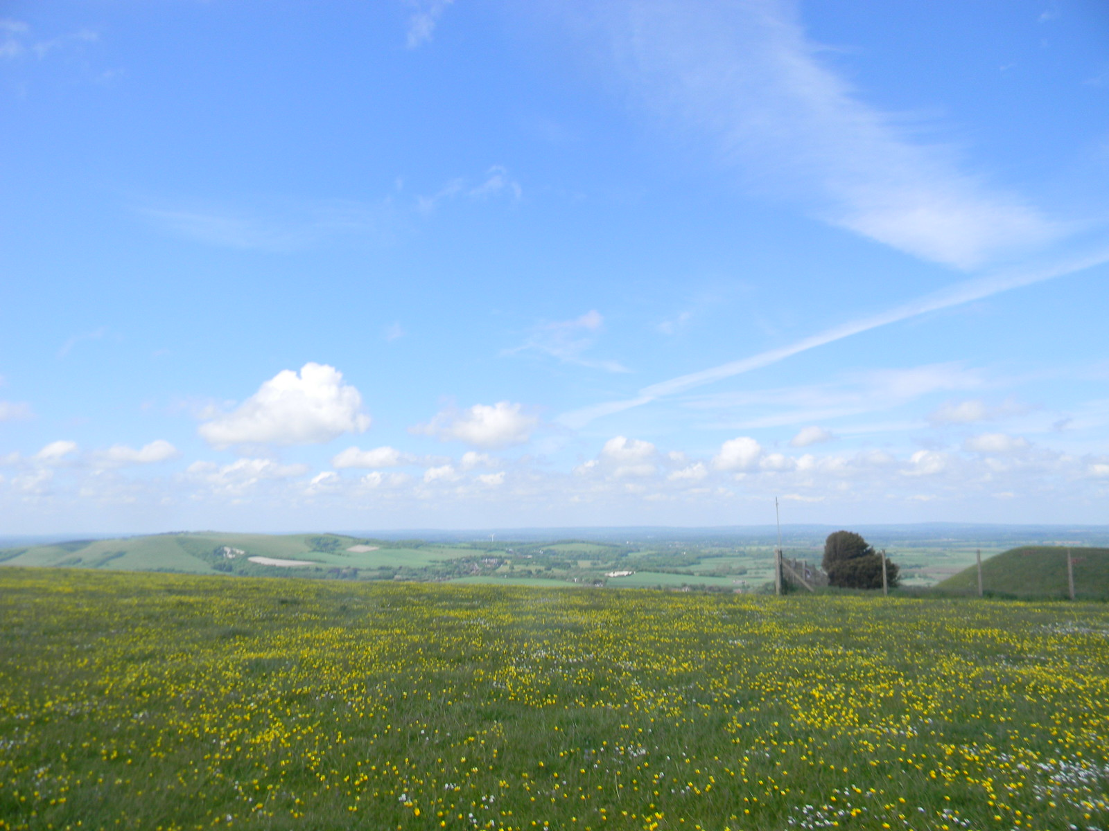 Buttercups on top Lewes Circular via West Firle