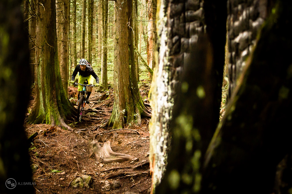 A racer battles the roots at the bottom of Dreamweaver