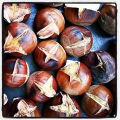 vegetable(0.0), coconut(0.0), wood(0.0), plant(0.0), chestnut(1.0), nuts & seeds(1.0), hazelnut(1.0), produce(1.0), food(1.0), nut(1.0),