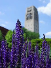 Tower in Purple