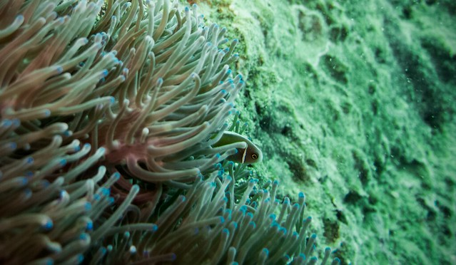 Tioman diving by Anton Veselov via TinyBlackBird.com