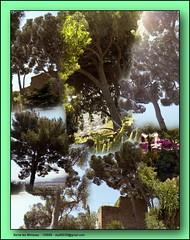 Borne les Mimosas