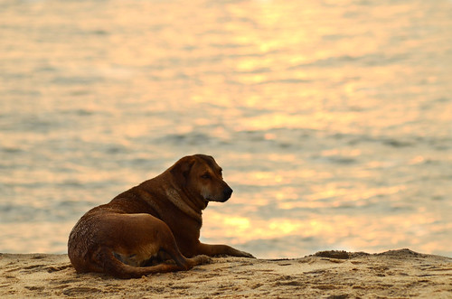 dog beach mundakkal kollam pet waiting master sunset sea