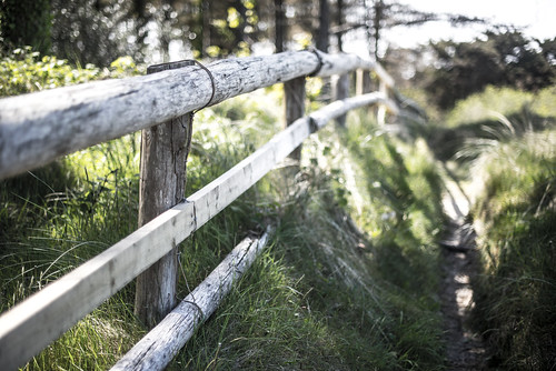 Fence at Curracloe