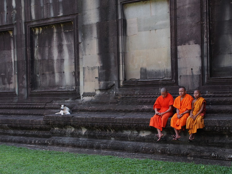 A Dog and Buddhist Monks at Angkor Wat