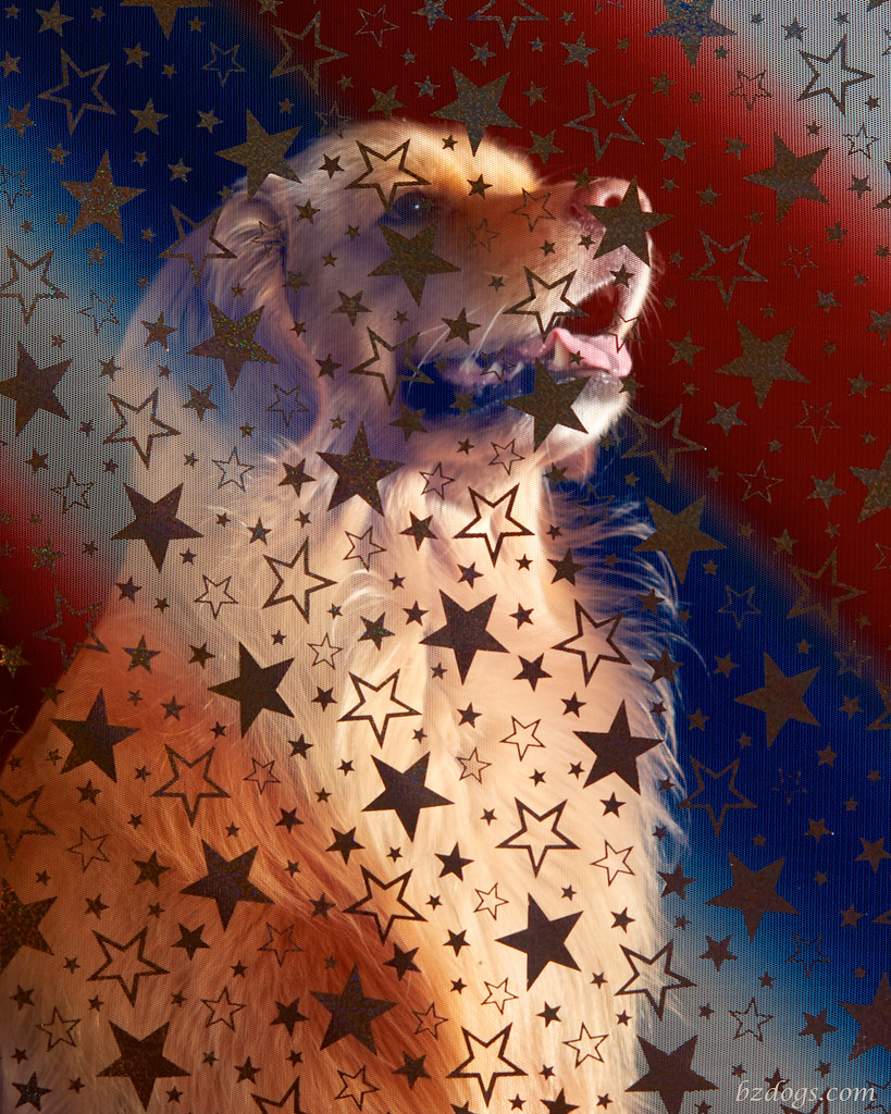 Star Spangled Golden