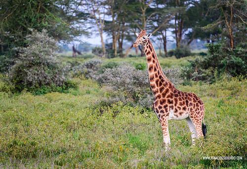 Kenya - Nakuru 19