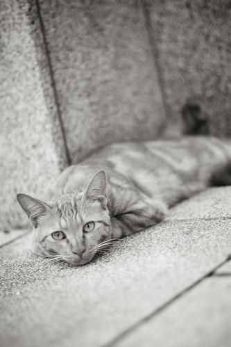 CAT 6 20130715