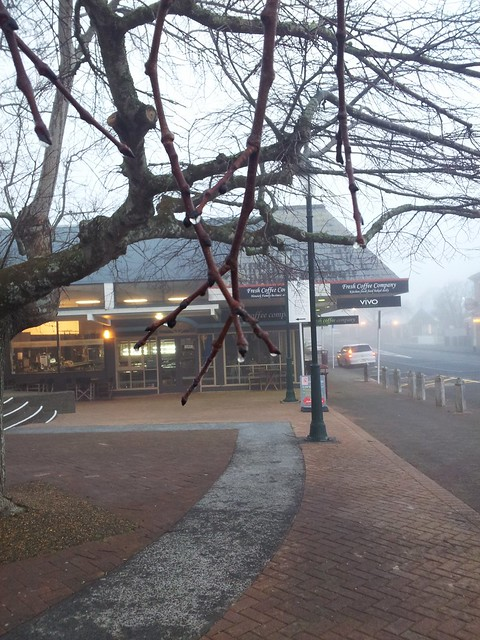 Water droplets in Howick square on a foggy Monday morning