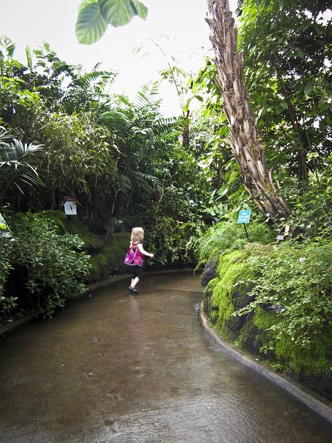 New York Botanical Garden Membership Garden Glamorous Shade Garden Design Plans Shade Garden