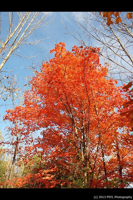 Autumn colours at Jackson Park