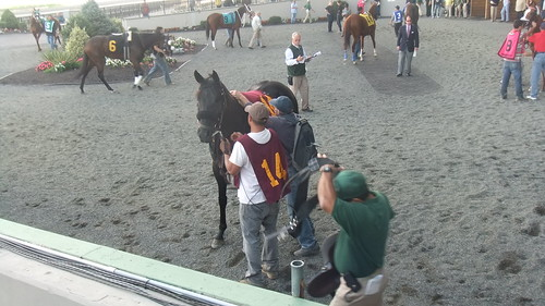 I'm Makin Notes Was A Handful In Paddock Before Race 6 At The Meadowlands