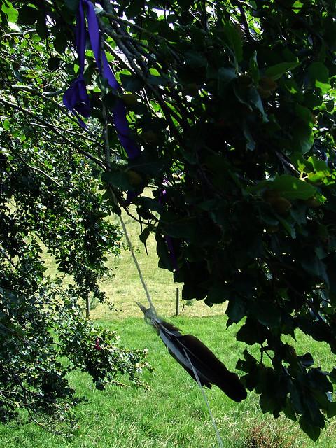 Avebury beeches 6