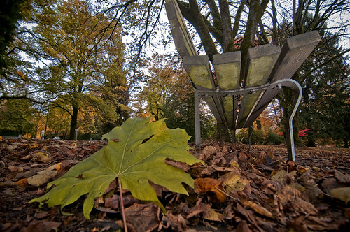 Squirrels Eye View by petetaylor