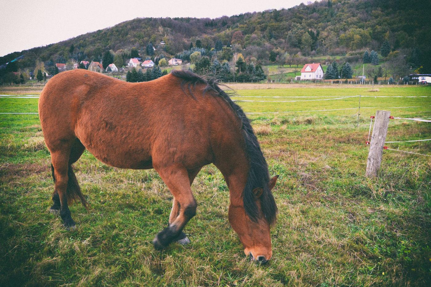 Zwischen Graupa und Pillnitz