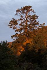 Trees on the Skylne