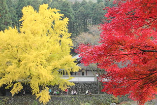 Red and yellow / 紅と黄