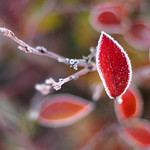 Frost bokeh
