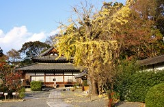 Shinshu Otani-ha