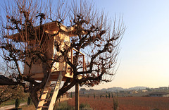 tree house for childrens_il vajol