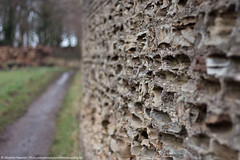 31. Rough Texture - The Wall (2/52) - Explore