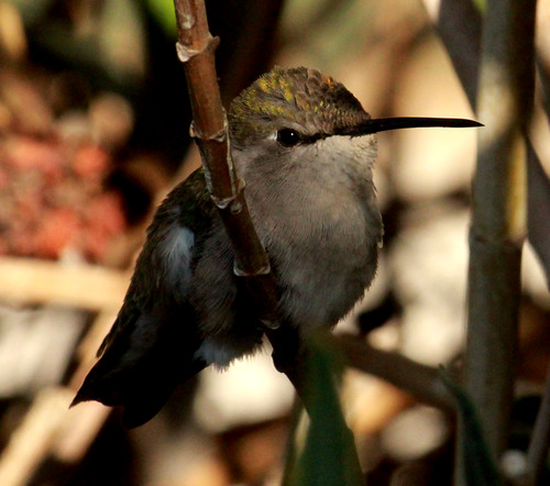 143136-1.jpg by Robert W Gilcrease