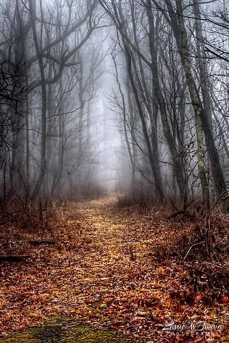 winter fog virginia appalachia blueridgemountains hdr appalachiantrail theat hikingtrail shenandoahnationalpark at