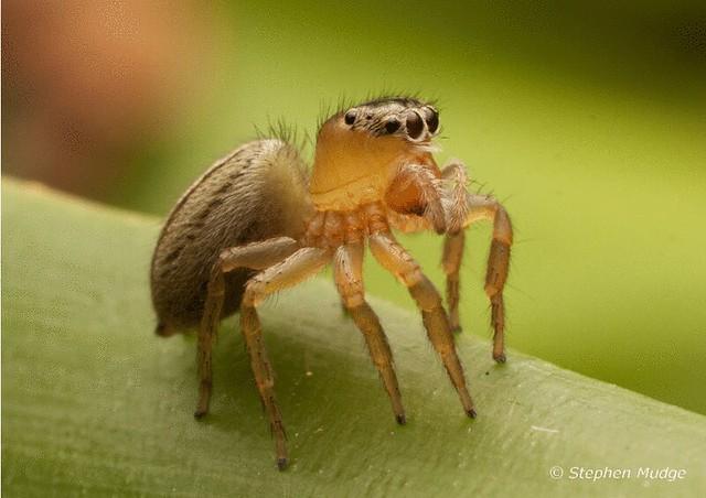 Spider animation VIEW ORIGINAL SIZE.gif