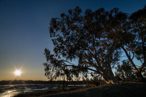 california morning blue trees orange color silhouette sunrise wideangle f16 paloalto sanfranciscobay backlit lowtide baylands 14mm samyang rokinon