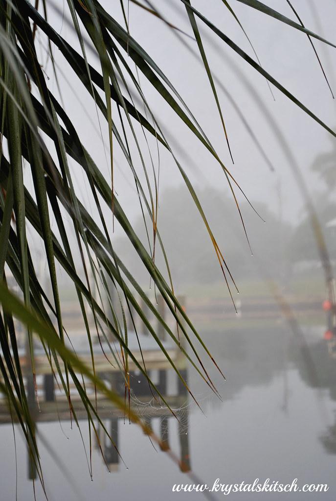 Rainy Palm Tree