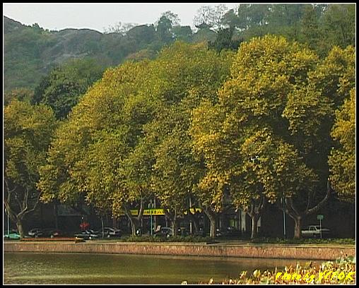 杭州 西湖 (其他景點) - 127 (從白堤上看北裡湖畔及北山路)