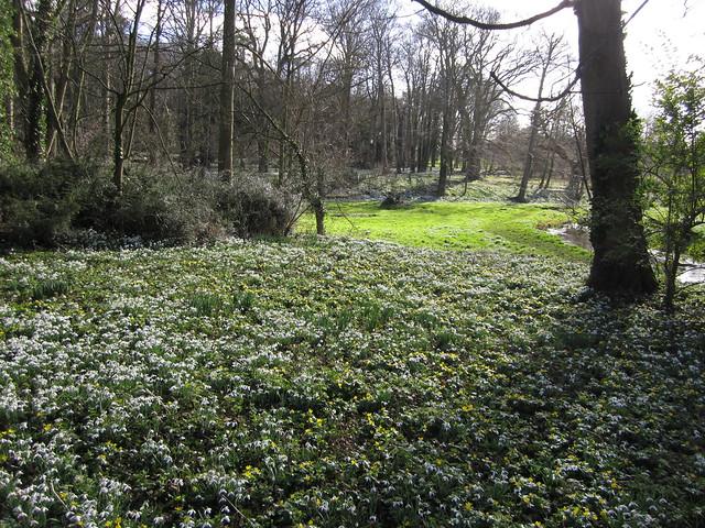 snowdrop walk Walsingham Feb 2014 (12)