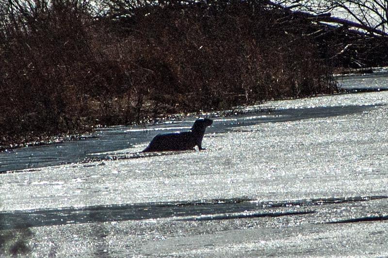 Muscatatuck National Wildlife Refuge - February 22, 2014