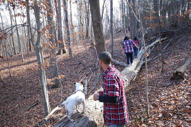 Dogs have fun on the trails with their families at Virginia State Parks