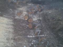 taglio alberi roccadaspide forestale