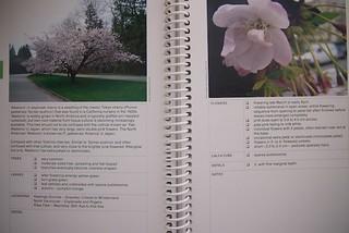 Cherry Blossom Guidebook