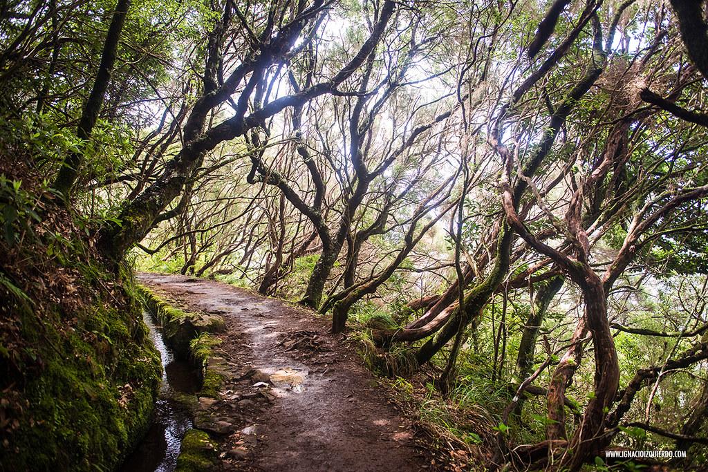 Madeira 15