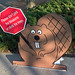 friendly cherry blossom beaver - Washington DC - 2014-04-10