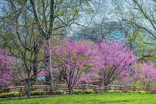 Spring at Missouri Botanical Garden
