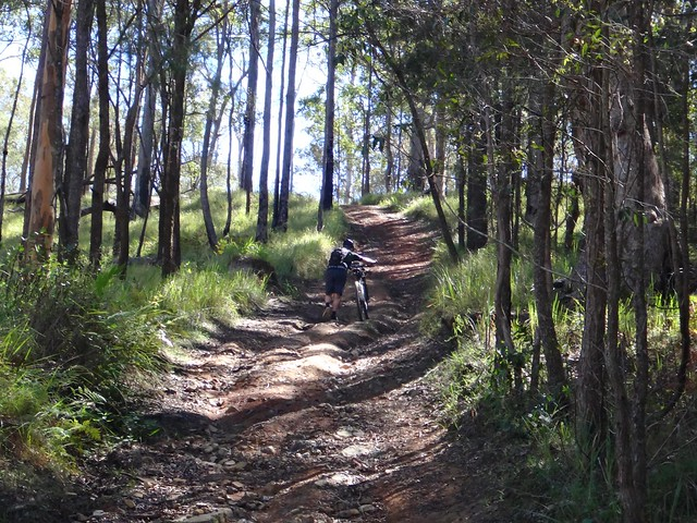 Maleny National Park