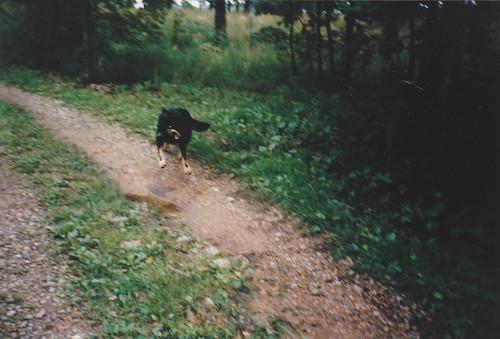 My old dog Tamtur