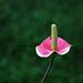 Flower by Regina Stroschoen