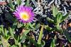 Flor bajo el sol de la mañana